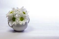 Gänseblümchen in einem weißen sugarpot Lizenzfreie Stockbilder