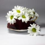 Gänseblümchen in einer magentaroten Porzellanteetasse Lizenzfreie Stockbilder