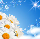 Gänseblümchen gegen den Himmel Lizenzfreie Stockfotos