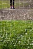 Gänseblümchen hinter dem Zielnetz Lizenzfreie Stockfotografie