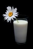 Gänseblümchen im Glas Milch Lizenzfreies Stockfoto