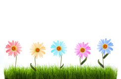 Gänseblümchen im grünen Gras Stockbild