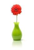 Gänseblümchen im grünen Vase Lizenzfreie Stockfotografie