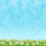 Gänseblümchen im Gras Stockbilder