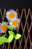 Gänseblümchen im Bretterzaun Stockfotografie