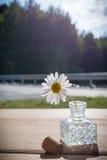 Gänseblümchen im Tintenfaß III lizenzfreie stockfotografie