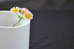Gänseblümchen im weißen Cup Lizenzfreies Stockfoto