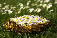 Gänseblümchen im Weidenkorb lizenzfreie stockbilder