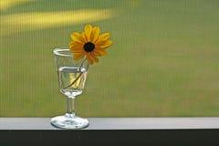 Gänseblümchen im Weinglas Stockfotografie