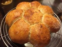 Gänseblümchen mögen selbst gemachtes Brot Lizenzfreie Stockbilder