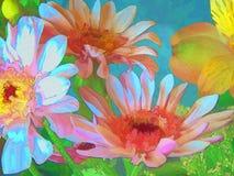 Gänseblümchen in Mehrfarben1 lizenzfreie abbildung