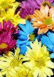Gänseblümchen-Mehrfarbenhintergrund #2 Stockfotografie