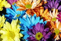 Gänseblümchen-Mehrfarbenhintergrund Lizenzfreie Stockbilder