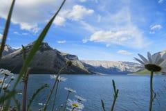 Gänseblümchen mit einem schönen Hintergrund stockfotografie