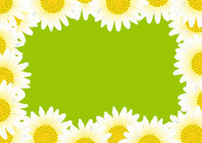 Gänseblümchen mit Tropfen Lizenzfreies Stockbild