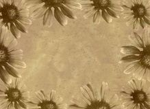 Gänseblümchen-Schablone Stockbild