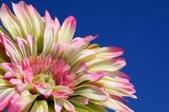Gänseblümchen und blauer Himmel Stockfotografie