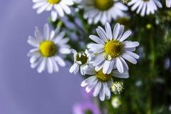 Gänseblümchen und Blumen Stockbild