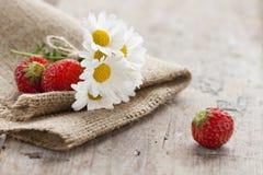 Gänseblümchen und Erdbeeren Stockfotos