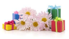 Gänseblümchen und Geschenke lizenzfreie stockbilder
