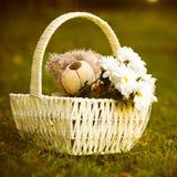 Gänseblümchen und Teddybär Lizenzfreies Stockfoto