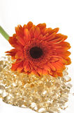 Gänseblümchen und Vitamin caplets stockbilder