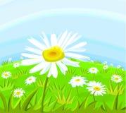 Gänseblümchenblume Stockfotos