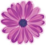 Gänseblümchenblume stock abbildung