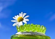 Gänseblümchenblume auf Pinsel Stockfotografie