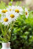 Gänseblümchenblume im Vase mit flachem Fokus Lizenzfreie Stockfotos