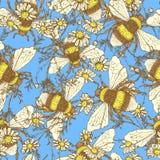 Gänseblümchenblume und -bienen Lizenzfreie Stockbilder
