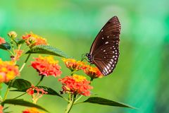 Gänseblümchenblume und -schmetterling Lizenzfreie Stockbilder