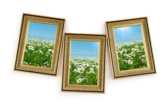Gänseblümchenblumen in den Bilderrahmen Stockbild