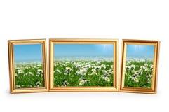 Gänseblümchenblumen in den Feldern auf Weiß Lizenzfreie Stockbilder