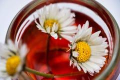 Gänseblümchenblumen im roten medizinischen Elixier Stockfoto
