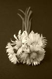 Gänseblümchenblumen, Sepia Lizenzfreie Stockfotos
