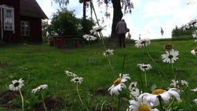 Gänseblümchenblumen und Landwirtmann mähen Rasen mit Trimmer nahe Haus stock footage