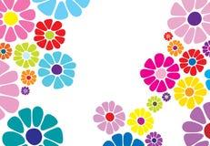 Gänseblümchenblumenmuster stockfoto