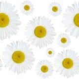 Gänseblümchenblumenmuster Stockfotografie