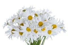 Gänseblümchenblumenstrauß Lizenzfreie Stockfotografie
