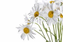 Gänseblümchenblumenstrauß Lizenzfreies Stockfoto