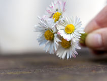 Gänseblümchenblumenstrauß Stockfoto