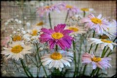 Gänseblümchenblumenstrauß blüht Schmutz Lizenzfreie Stockfotos