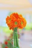 Gänseblümchengerbera-Blume Stockfoto