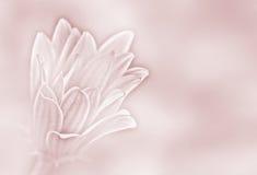 Gänseblümchenhintergrund des rosafarbenen Papiers Lizenzfreies Stockbild