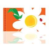 Gänseblümchenhintergrundillustration Stockbild