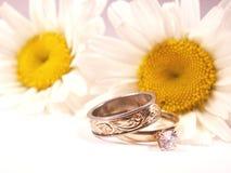 Gänseblümchenliebe stockfotos