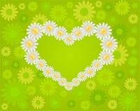 Gänseblümchenliebe Stockfoto