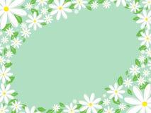 Gänseblümchenrand Lizenzfreie Stockbilder