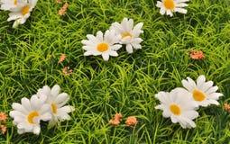 Gänseblümchenwiese Stockfoto